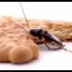 5 metode de a scapa de gandacii de bucaterie