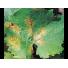 COADA-CALULUI  Concentrat natural împotriva făinării pe viță de vie, mucegai gri / putregai gri, boală fungică (buclă) pe piersici, nectarine, migdale, alternarioza pe roșii și castraveți, septoria pe grâu, Flortis Naturae, 500 ml.