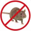 Combaterea șoarecilor și șobolanilor
