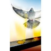 Gel pentru alungarea păsărilor (porumbei, pescaruși) Bird free optical gel - 1 cutie